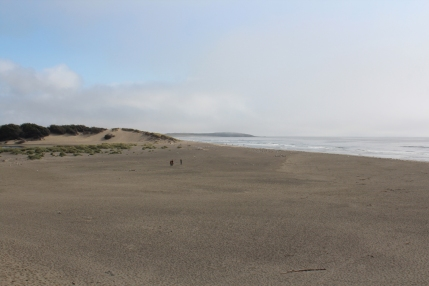 Just north of Bodega Bay.